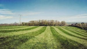 Fields after being rolled by a tractor